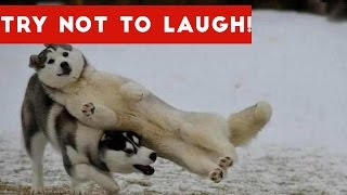 Try Not To Laugh At This Funny Dog Video Compilation | Funny Pet Videos