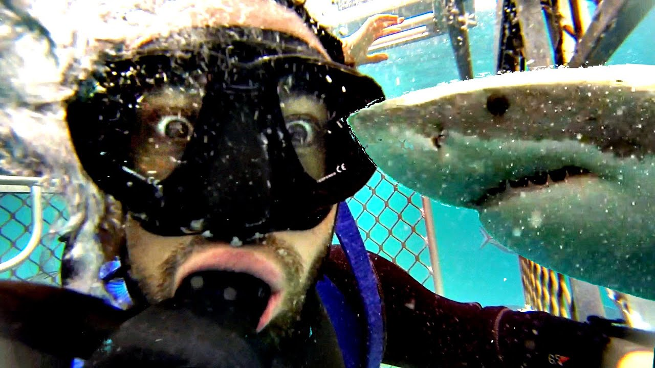 How a Shark Attack Survivor Invented Cage Diving