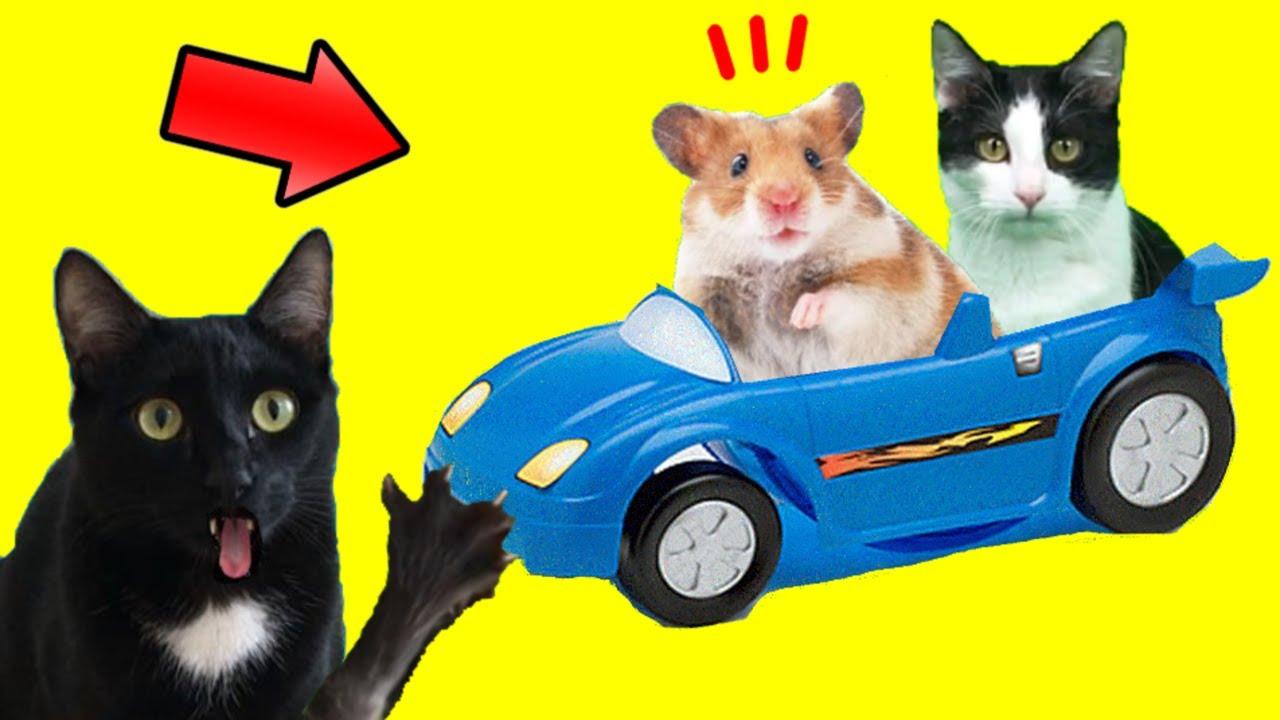 Gato vs auto para hamster con gatos graciosos Luna y Estrella y mi perro / Videos de gatitos