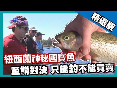【紐西蘭】只能釣不能賣!? 國寶虹鱒釣魚大賽|《世界第一等》674集精華版