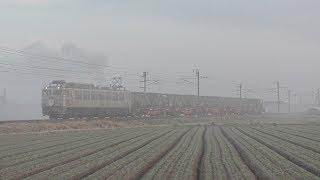 【JR貨物】1151レ EF81-303 冠付き銀釜 大牟田専貨