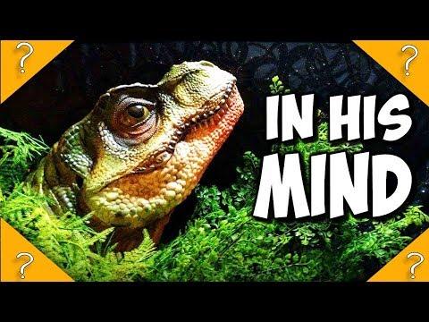 Junior T-rex POV - kidnapped The Lost World