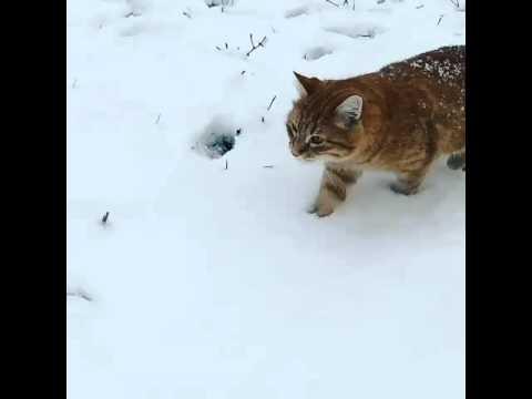 Краснодар кот рыжий