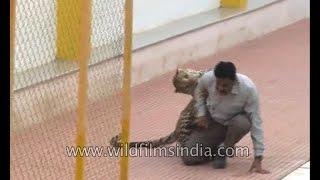 Leopard encounter in India