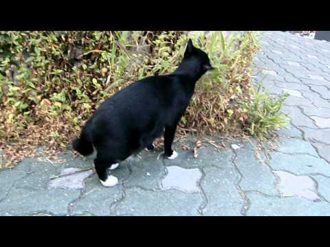 very friendly stray cat