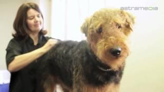 Hundesalon Picasso, St. Gallen, Hund, Katze Pflege