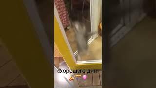Смешной танцующий котенок, стоит посмотреть.