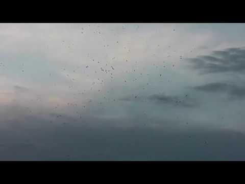 Птичий Новый Год 2018 в г.Россошь|30.12.2017