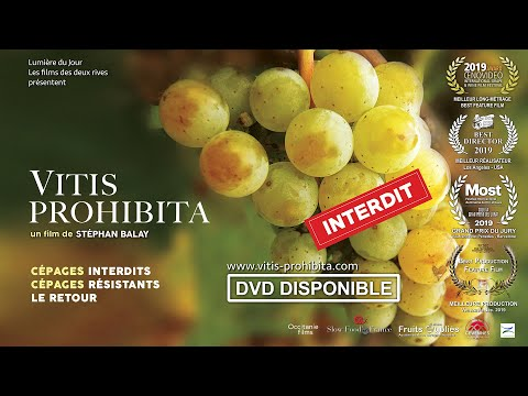 "Documentaire ""Vitis prohibita"""
