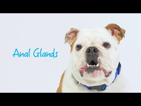 Maintaining Healthy Anal Glands in Dogs & Cats with Glandex