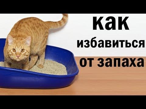 """Как избавиться от """"кошачьего запаха"""". САМОЕ ЛУЧШЕЕ СРЕДСТВО."""