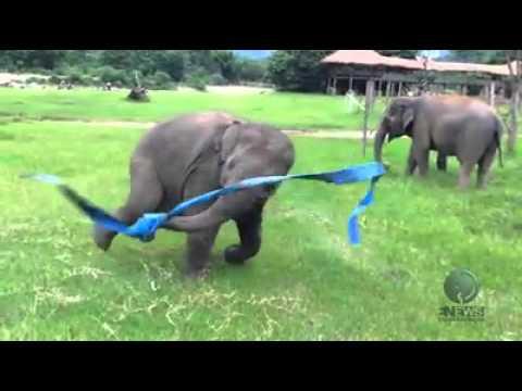 Elephant having fun