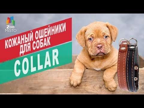 Кожаные ошейник для собак Collar | Обзор кожаные ошейник для собак Collar