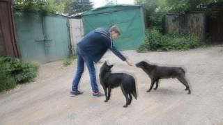 Видео-акция Кормим бездомных животных!2!