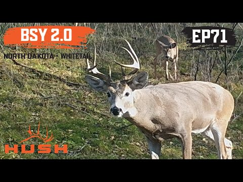 BOWHUNTING WHITETAILS IN NORTH DAKOTA
