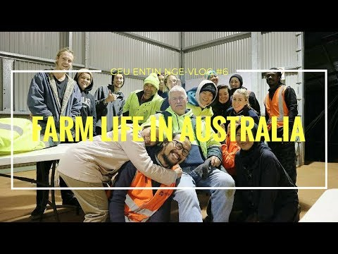 DAILY FARM LIFE IN AUSTRALIA (Blueberry Packing)