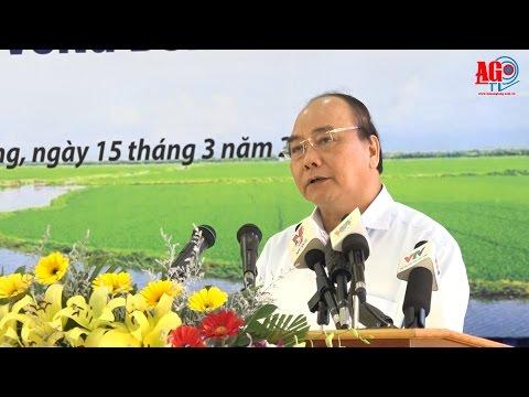 Thủ tướng chủ trì Hội nghị lúa gạo vùng Đồng bằng sông Cửu Long