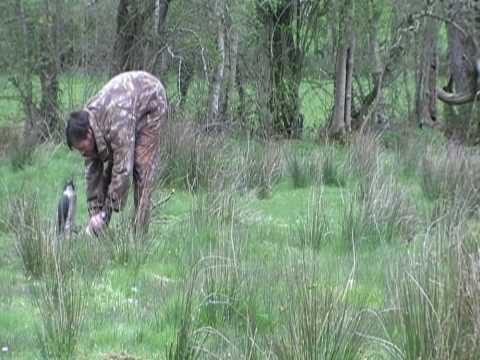 Air Rifle Hunting With A Bird Of Prey Decoy, 2009.