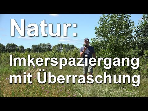 Mielkendorf: Bienen, Seeadler, Hunde, Jakobskreuzkraut und Imker