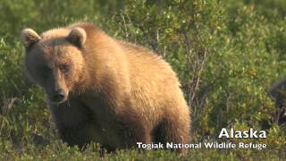 50 Years of Wilderness in the National Wildlife Refuge System