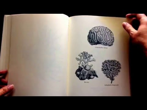 The Art of Nature Coloring Book by Adams Media