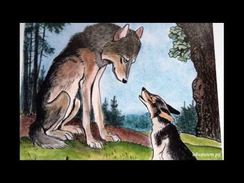 Как собака друга искала текст сказки