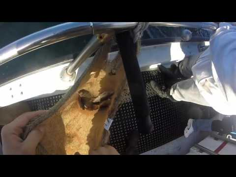Emeryville Rockfish Charter- Tigerfish