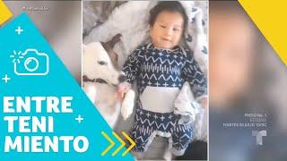 Critican a Chyno por el video de su hijo junto a su perro   Un Nuevo Día   Telemundo