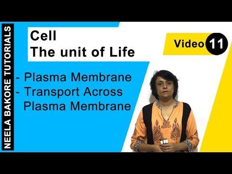 Cell - The Unit Of Life - Plasma Membrane - Transport Across Plasma Membrane