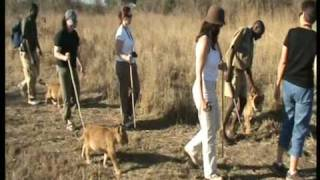 Zimbabwe, Africa Elephant Ride and Lion Walk