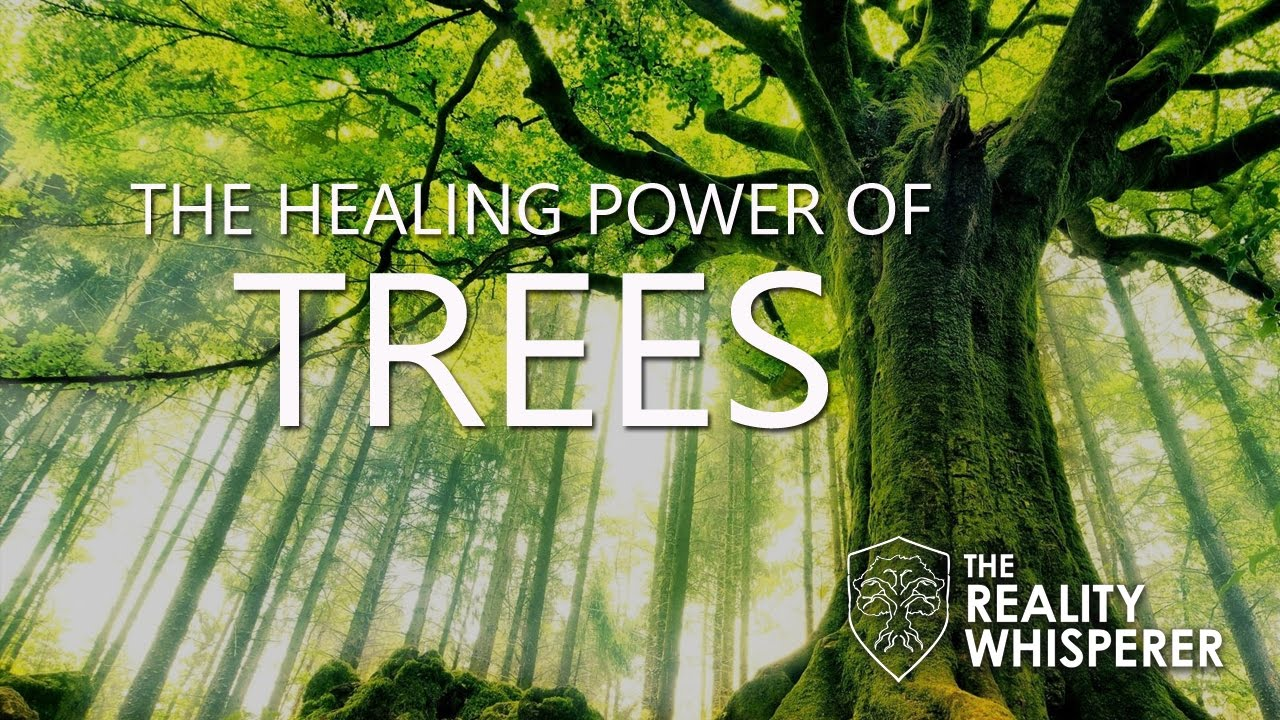 Forest Bathing and the Healing Power of Trees