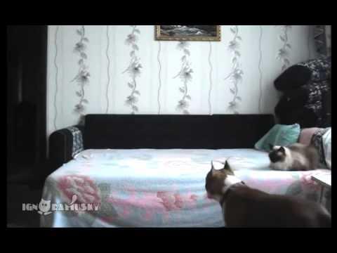 Домашний подсмотренный секс - скрытая камера, подсматривание