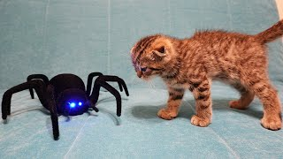 Cat vs Spider  My kitten fights in a 3 levels game