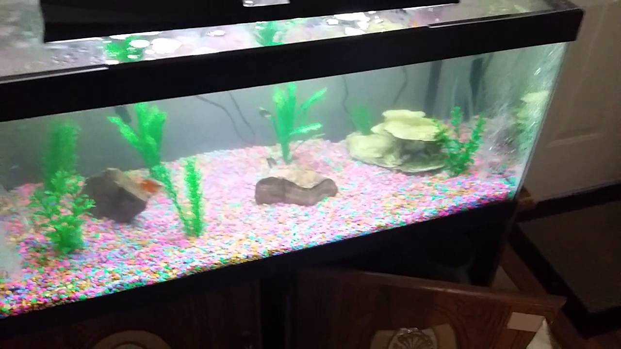Top fin 20 gallon to 40 gallon aquarium youtube for 20 gallon fish tank hood