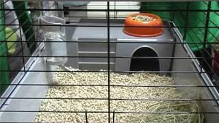 Кролик: О Чем Надо Задуматься При Покупке . Все О Домашних Животных