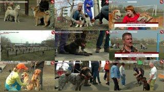 Время местное - Выставка охотничьих собак