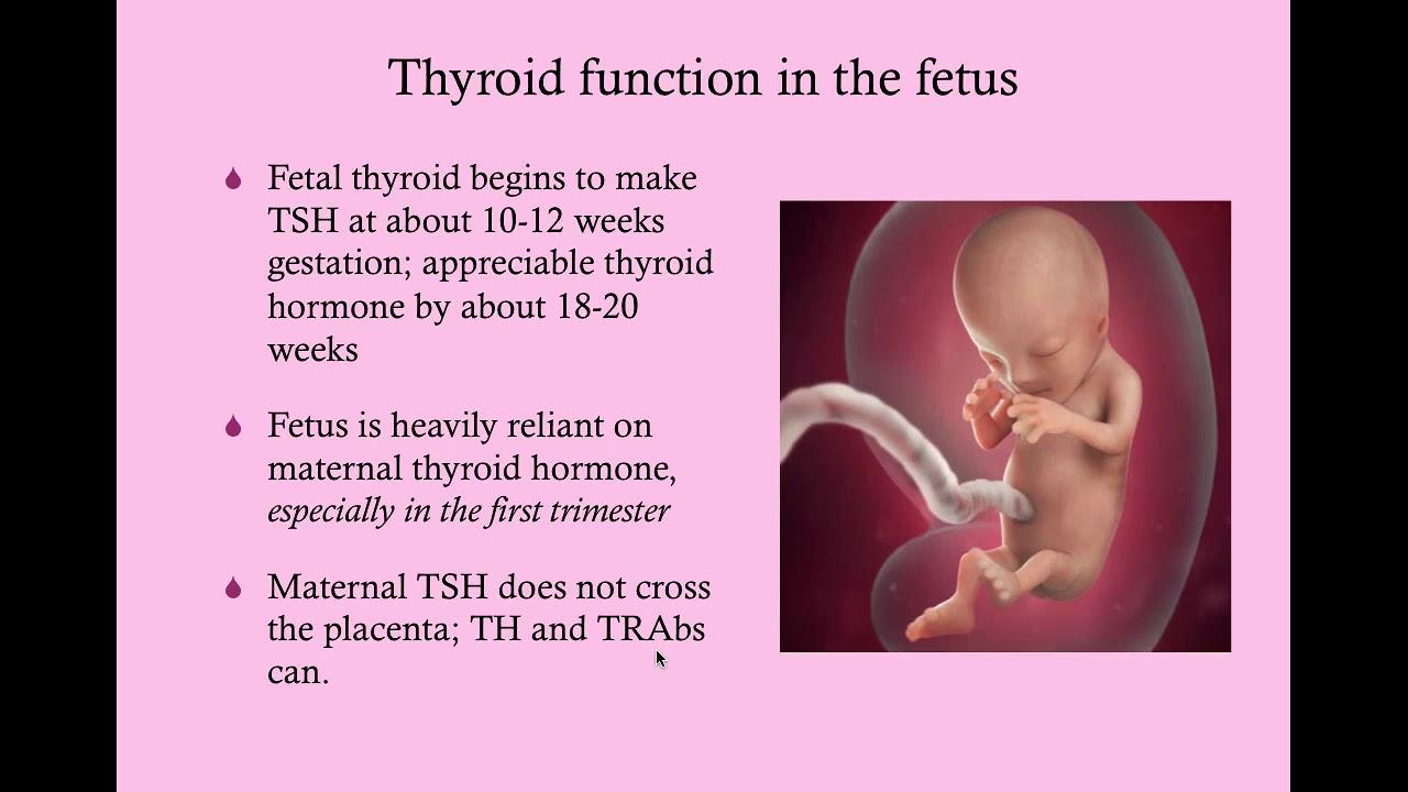 Thyroid Disease In Pregnancy Crash Medical Review Series Youtube