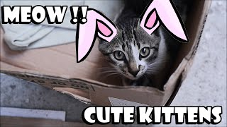 Cat Games | Playful Cats Video Compilation