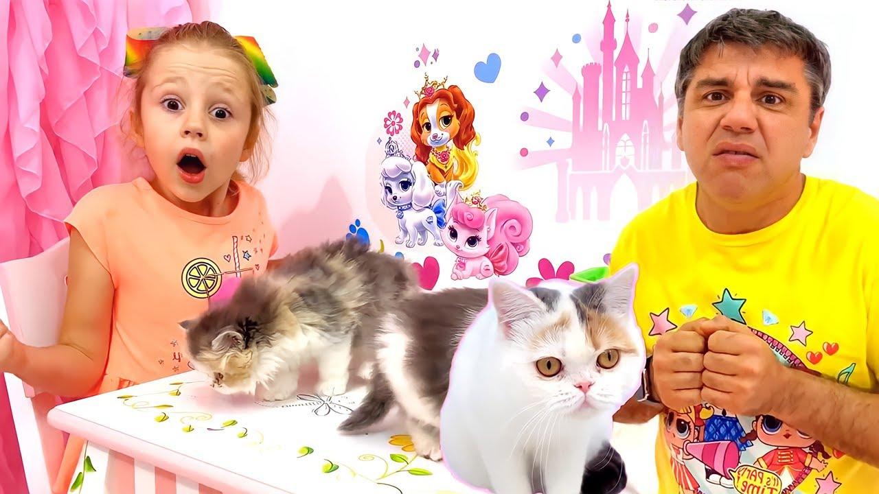 नस्त्या के पास दो बिल्ली के छोटे बच्चे हैं