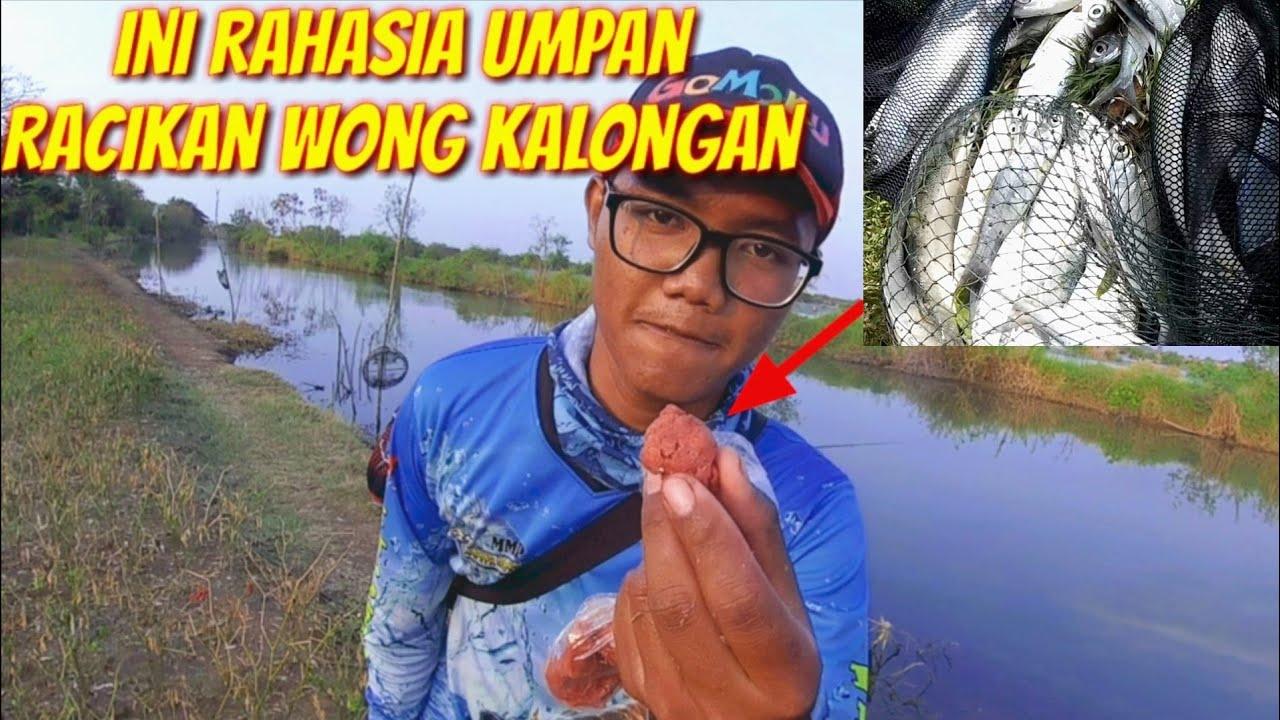 Ini Rahasianya Umpan Jitu Ikan Bandeng Liar Cara Membuat Umpan Bandeng Ampuh Youtube