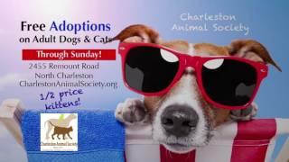 "Charleston Animal Society Adoptions ""Cat Signal"""