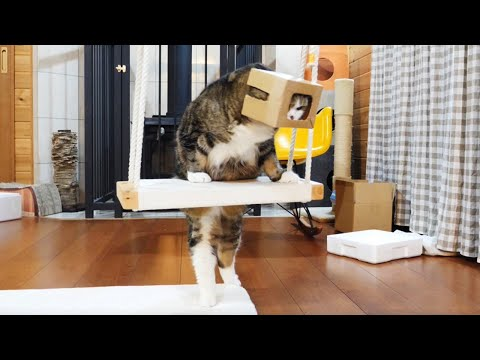 -Maru puts on the box as a matter of course.-