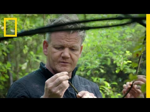 Gordon Ramsay Hunts For Native Foods Of New Zealand | Gordon Ramsay: Uncharted