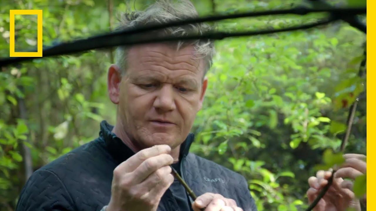 Gordon Ramsay Hunts for Native Foods of New Zealand | Gordon Ramsay: Uncharted