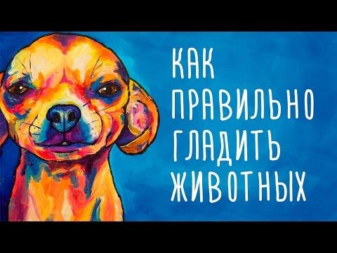 Как правильно ласкать собаку