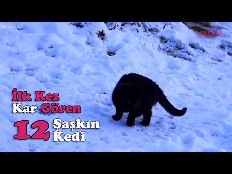 İlk Kez Kar Gören 12 Şaşkın Kedi