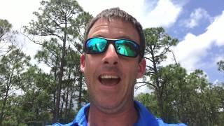 What Are Lovebugs? MASSIVE Invasion In Florida!!
