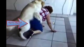 Dog Rapes Old Lady [HD]