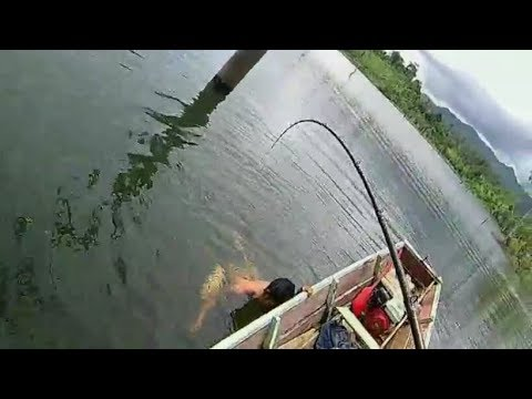 Mancing Casting ikan TOMAN Baboon....