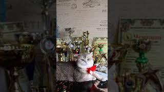 Чемпион кот Геннадий